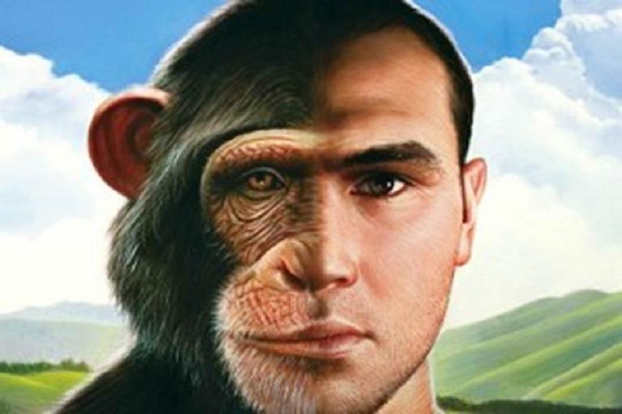 Секс с обезьяной это спид